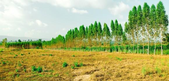 Fatores que contribuem com a degradação do solo na agricultura